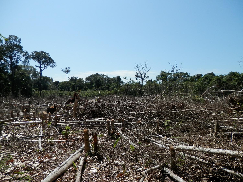 evs project on deforestation pdf